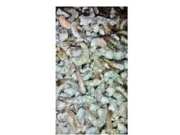 Camarão cinza com cauda 51/60 kg