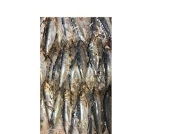 Sardinha inteira congelada kg