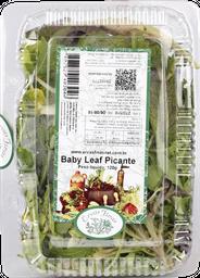 Ervas Finas Baby Leaf Picante