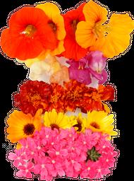 Mix De Mini Flores Comestiveis Bandeija 500 g