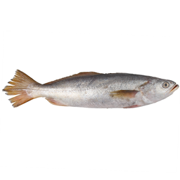 Pescada Branca Fresca Inteira