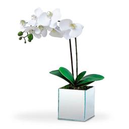 Orquídea Phalaenopolis Branca Un