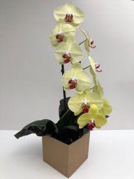 Orquidea 2 Penno