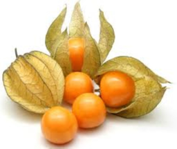 Physalis Berry Good