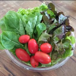 Salada do Senhor Fabaum