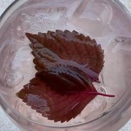 Sake Tonic de Rosas 300ml