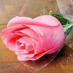 01 Rosa - de Cor Variada