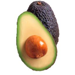 Abacate Avocado